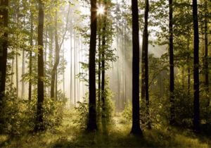 Fototapete Natur Lichtspiel Motiv