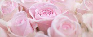 Glasbild Rosa Rosenblüten