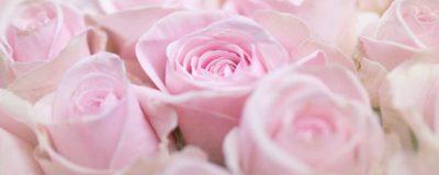 glasbild-rosa-rosenblüten