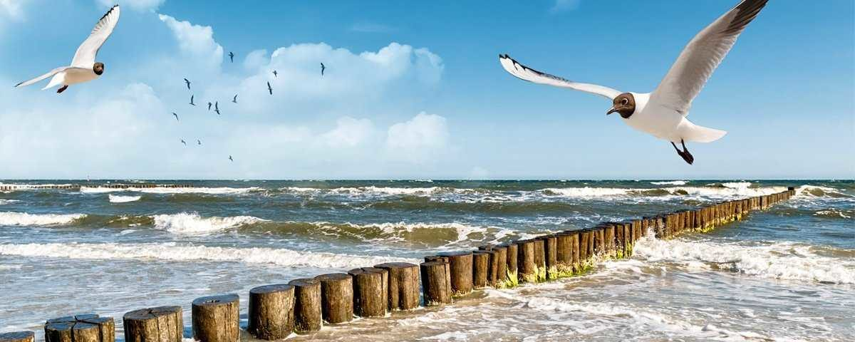 Glasbild Strand Fliegende Möwe