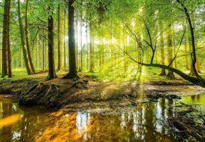 Fototapete strahlender Wald nur Motiv